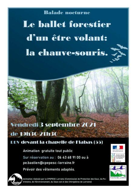 LE BALLET FORESTIER D'UN ÊTRE VOLANT : LA CHAUVE-SOURIS Moirey-Flabas-Crépion   2021-09-03