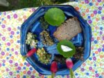 """""""Mardis de Pays"""" - Balade autour des plantes comestibles Saint-Gravé   2021-08-03"""