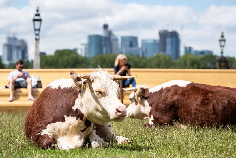 TDN 2021 : PARTAGEZ UN MOMENT BUCOLIQUE AVEC PASTURE WITH COWS DE CAPTAIN BOOMER