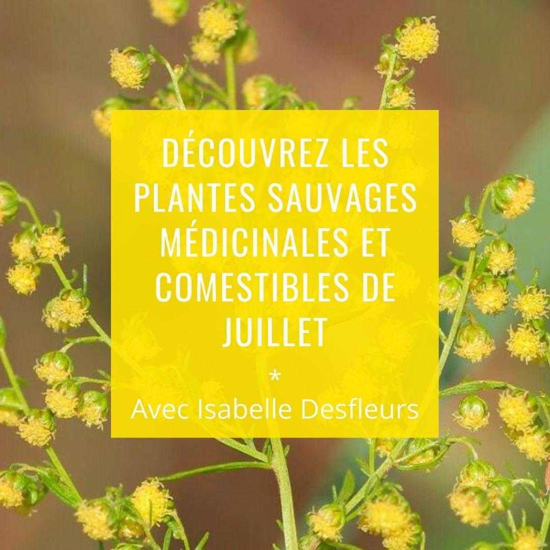 Sortie Nature Plantes sauvages médicinales et comestibles Bois de Vincennes Paris