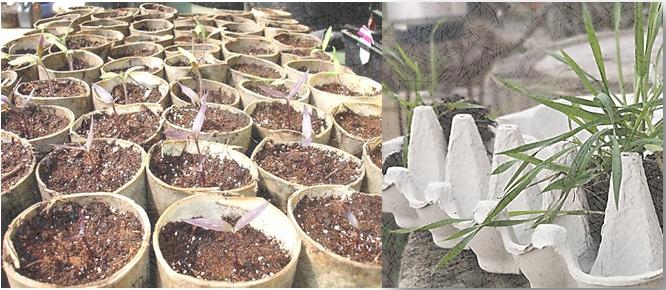 A la rentrée, multipliez vos plantes ! Maison du Jardinage – Pôle ressource Jardinage Urbain