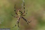 Idées fausses sur les araignées Maison Paris Nature Paris