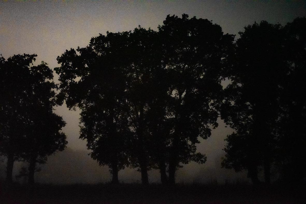 Arbre Photographie Nature Nuit Poesie Photographie