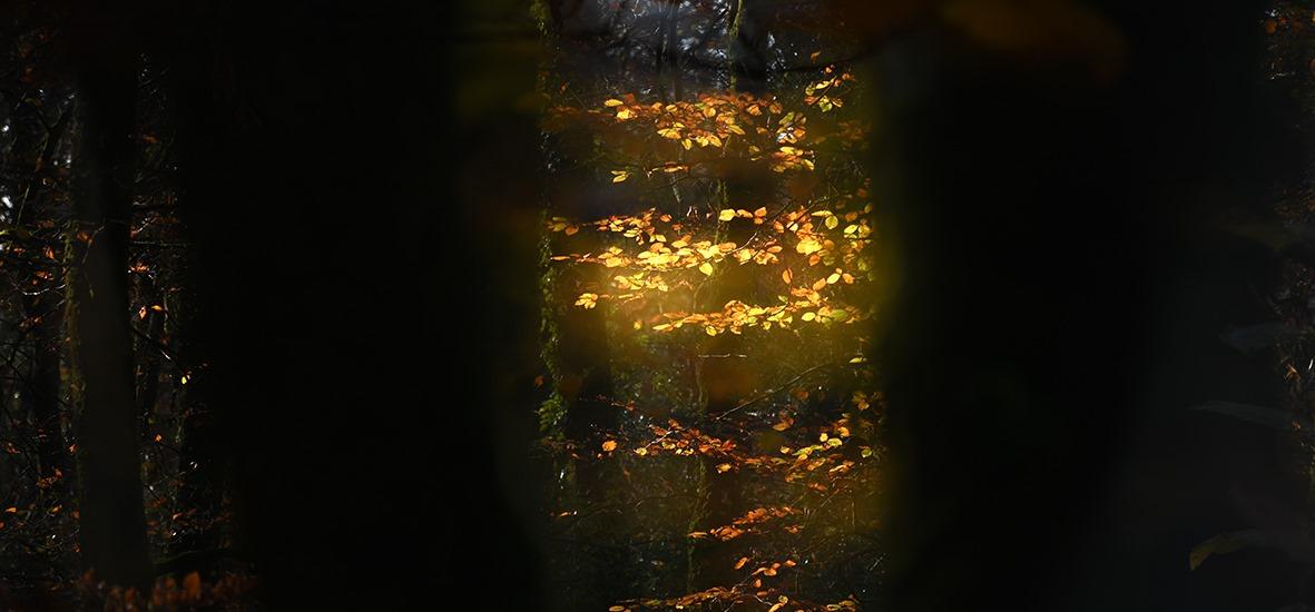 Arbre Matin Photographie Poesie Livre Nature