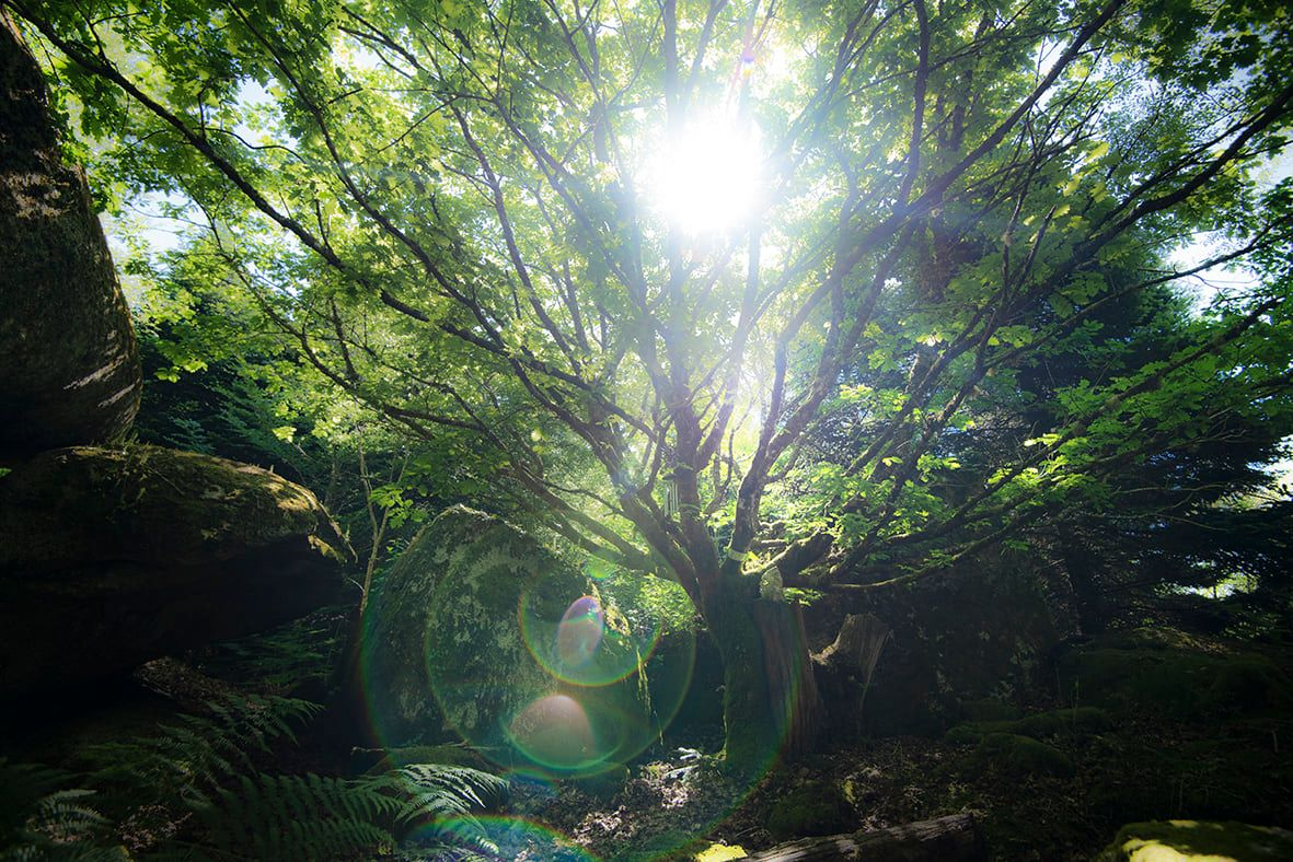 Arbre Photographie Nature Livre Poesie