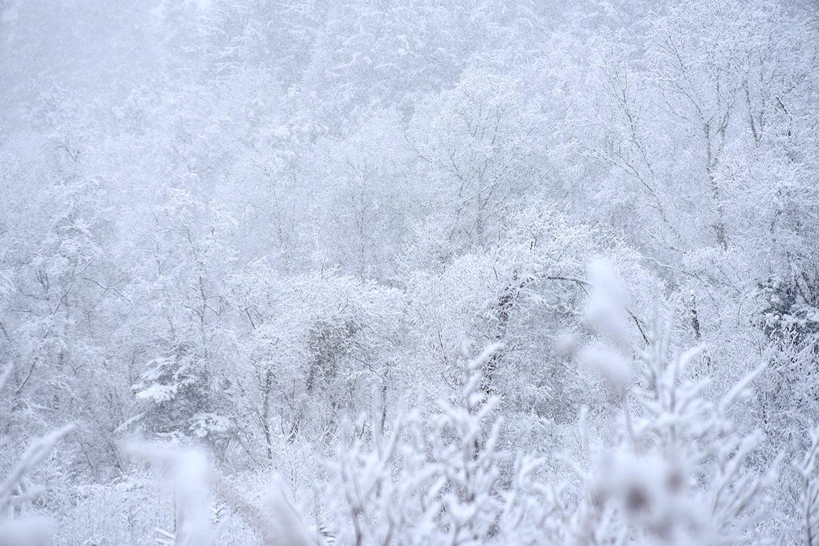 Arbres Photographie Neige Nature Poesie