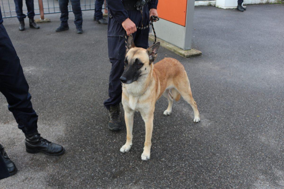 brigade canine