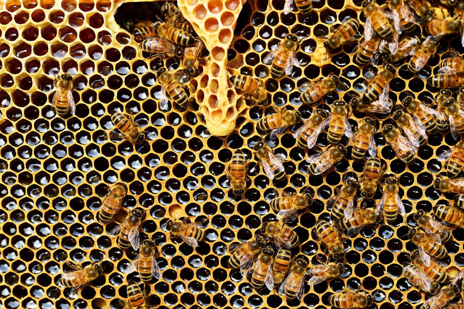 Cycle : L'apiculture à la portée de tous Thauvenay