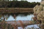 Nettoyage du site naturel des Quinconces Andernos-les-Bains