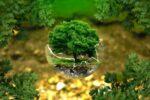 Plantons des forêts ! Abbeville