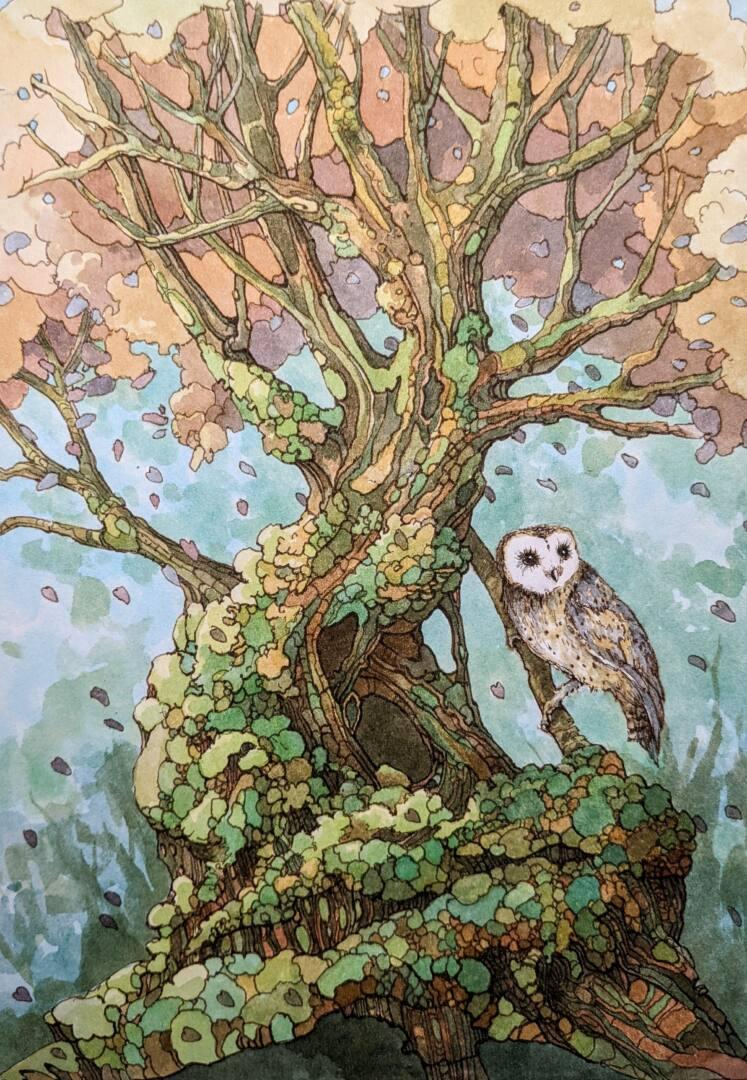 audrey rouvin illustration rennes